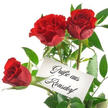 Rosen aus Ronsdorf